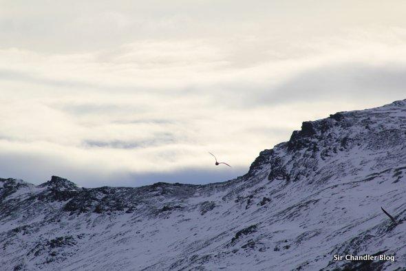 ushuaia-ave