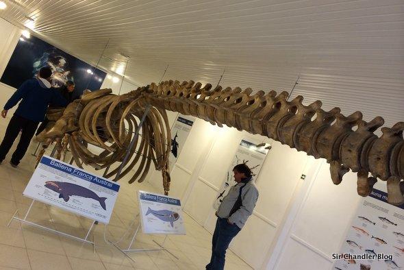 peninsula-valdes-ballena-esqueleto