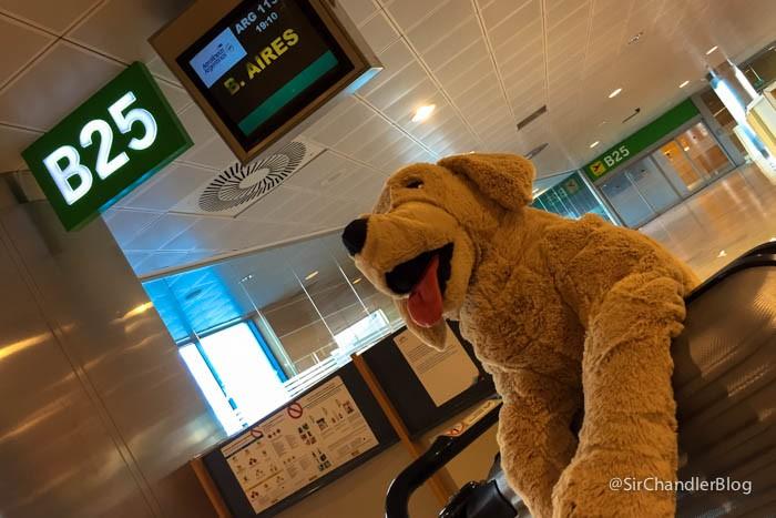 aerolineas-argentinas-mascotas-abordo
