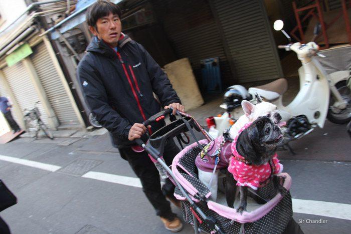 tokyo-fish-market-0445