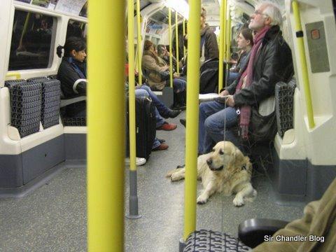 Viajando como perros