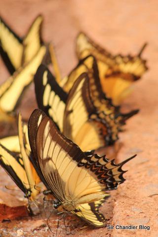 Animalitos de Iguazú