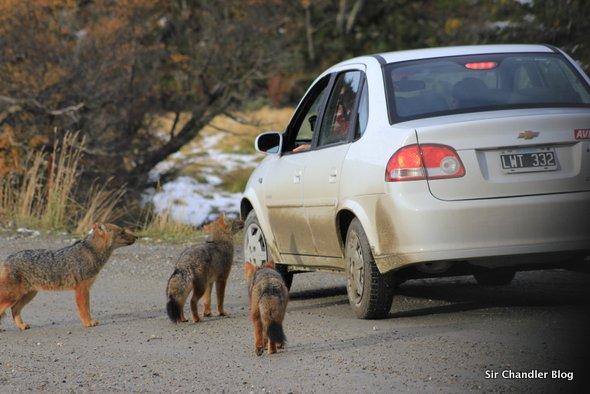 ushuaia-zorros