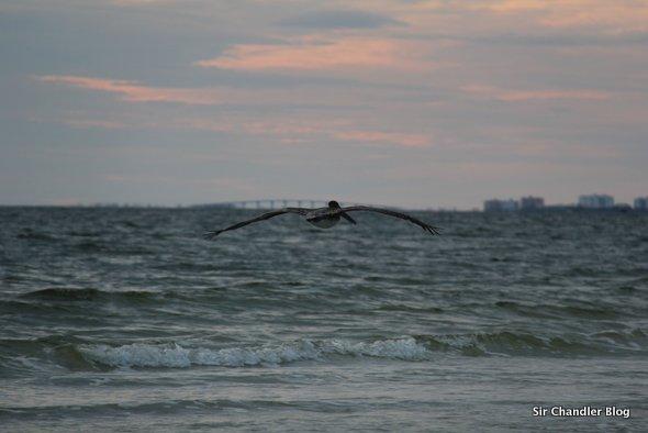 pajaro-oceano