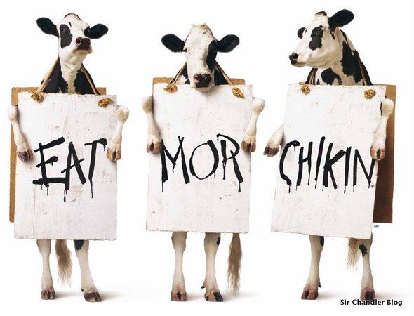 Chick-fil-A-vacas