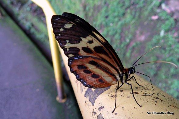 iguazu-mariposa