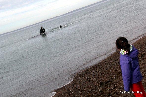 Avistaje de ballenas desde las playas de Puerto Madryn