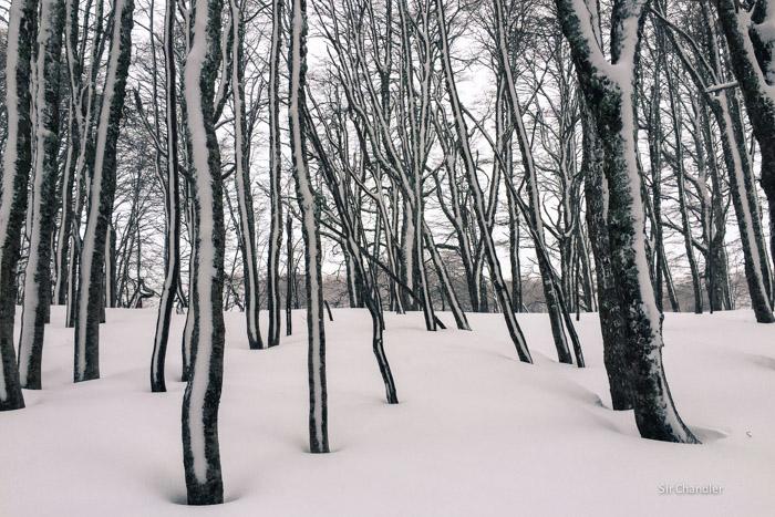 3-bosque-nieve