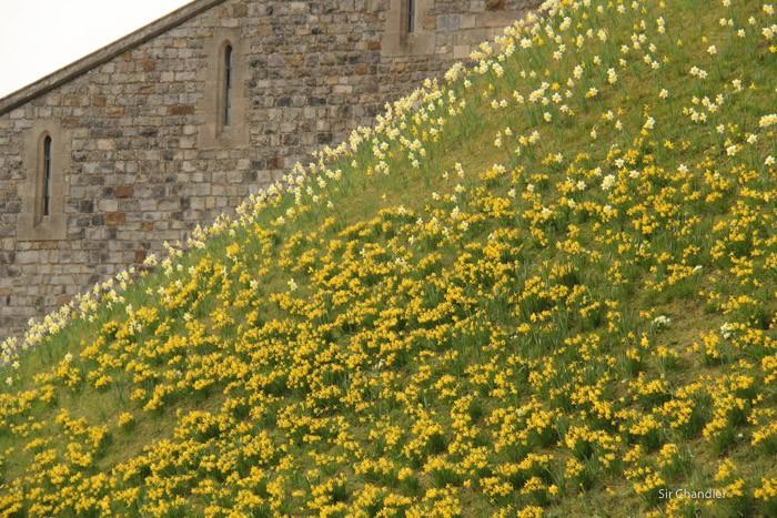 9-windsor-flores