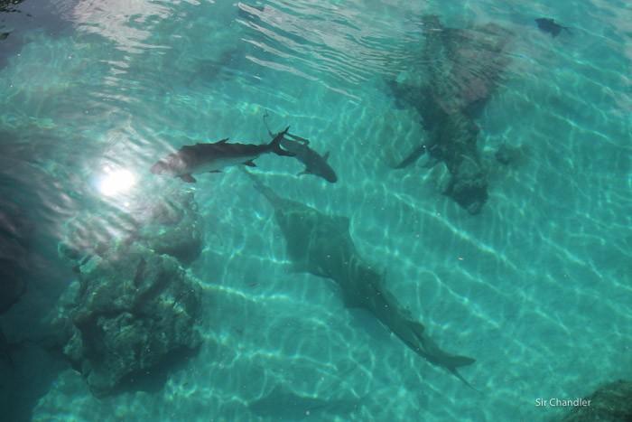 atlantis-bahamas-0716