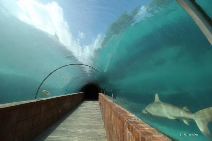 atlantis-bahamas-0718