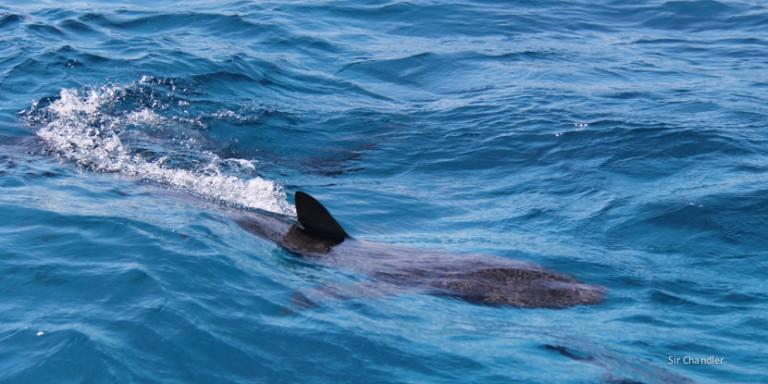 Snorkel y tiburones en Bahamas