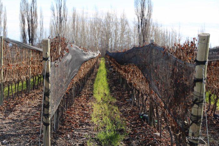 valle-de-uco-zuccardi-1147