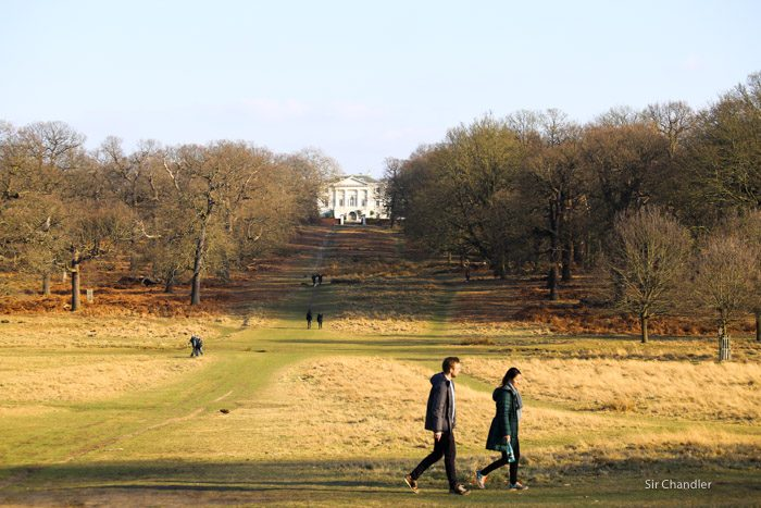 richmond-park-londres-8865