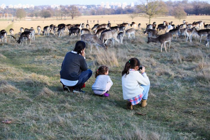 richmond-park-londres-8919