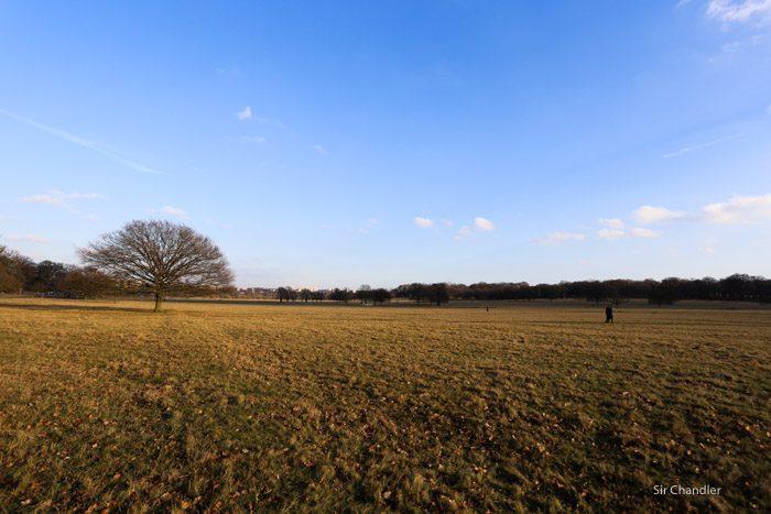 richmond-park-londres-8981