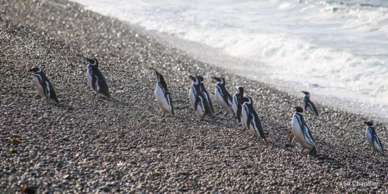 Fotografiando a pingüinos y elefantes marinos cerca de Puerto Madryn