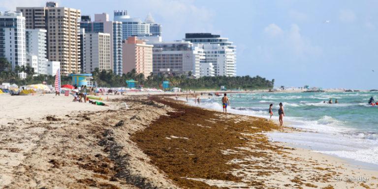 El Caribe y el sargazo ¿De mal en peor?
